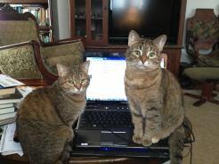 naughty cats