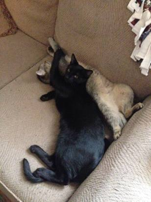 Loki and Kitsune