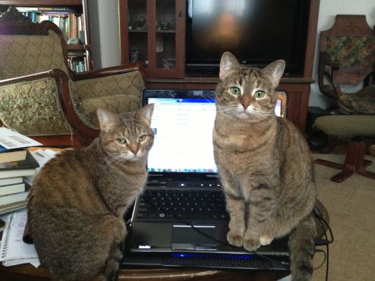 Willow and Morrigan on the Laptop