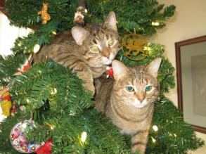 Willow and Morrighan in the Tree