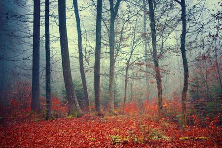 46036540 - colorful dreamy; foggy autumn forest scene background.